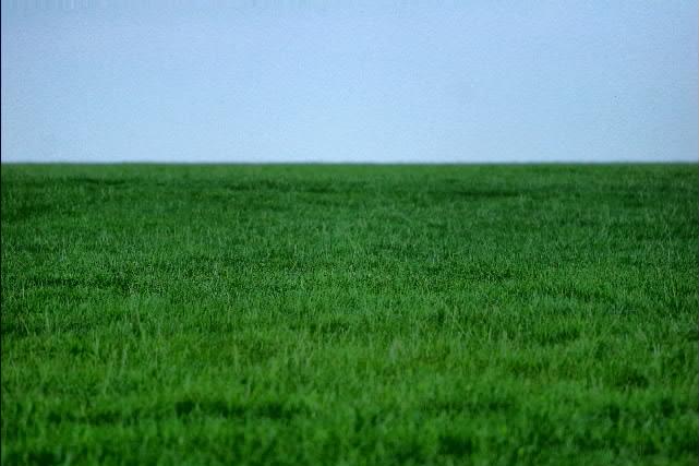 L 39 erba del vicino e i rumori molesti di mattina presto for Erba per prato che non si taglia